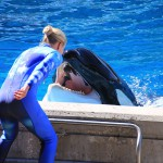 OSHA v. SeaWorld: the saga continues