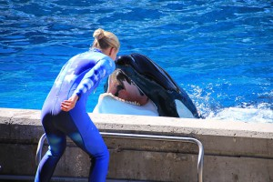 photo of trainer and killer whale