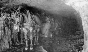 historic photo of mule in coal mine
