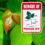 Staying safe from poisonous plants while camping just got easier!