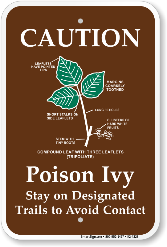 Poison ivy root pictures